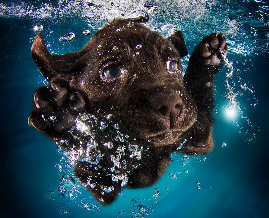 8939639 9 fotos increíbles de perros debajo del agua 9 fotos increíbles de perros debajo del agua 8939639