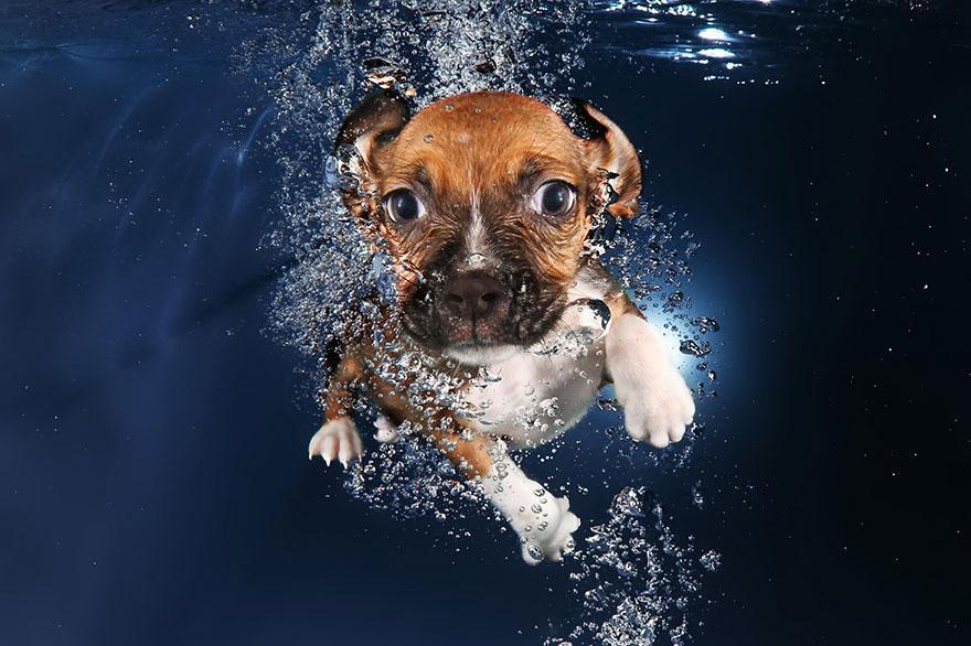 8939640 9 fotos increíbles de perros debajo del agua 9 fotos increíbles de perros debajo del agua 8939640