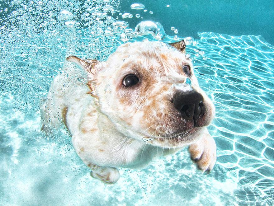 8939641 9 fotos increíbles de perros debajo del agua 9 fotos increíbles de perros debajo del agua 8939641