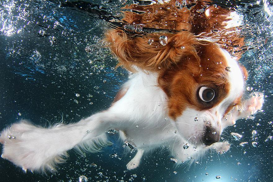 8939642 9 fotos increíbles de perros debajo del agua 9 fotos increíbles de perros debajo del agua 8939642