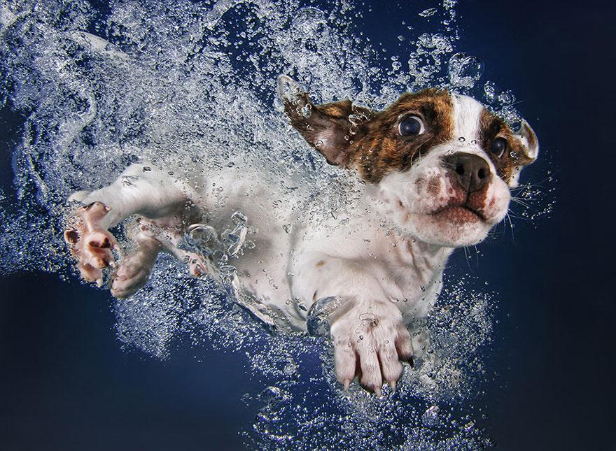 8939644 9 fotos increíbles de perros debajo del agua 9 fotos increíbles de perros debajo del agua 8939644