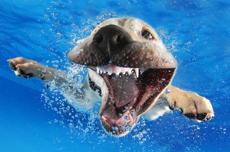 8939647 9 fotos increíbles de perros debajo del agua 9 fotos increíbles de perros debajo del agua 8939647