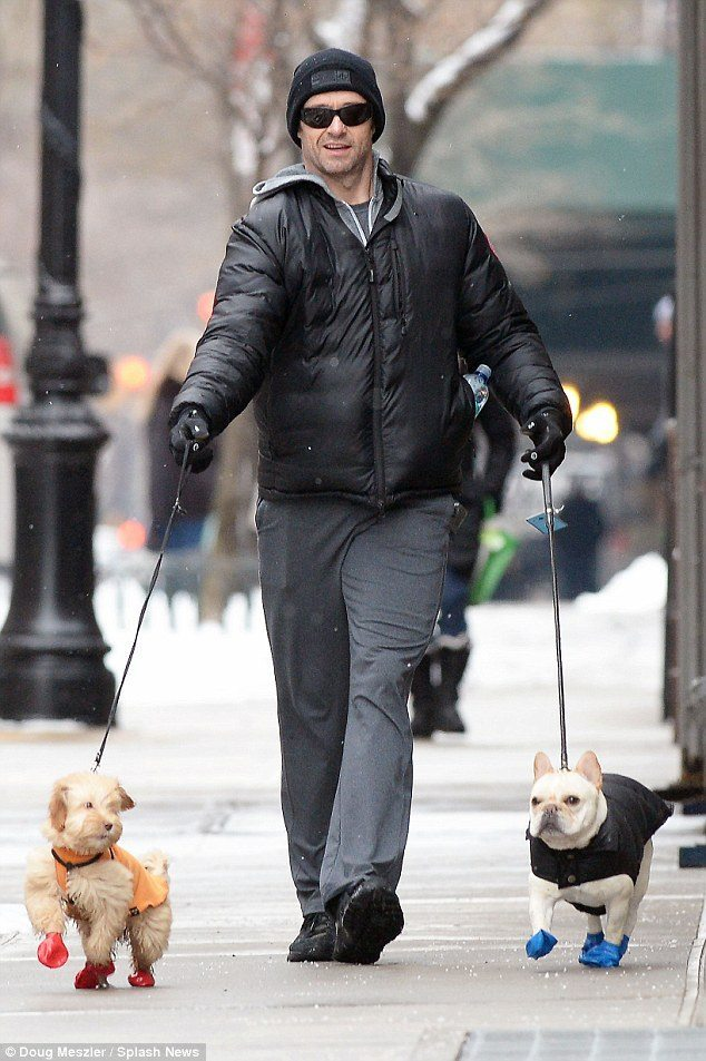 Hugh-Jackman Famosos que han adoptado animales Famosos que han adoptado animales Hugh Jackman