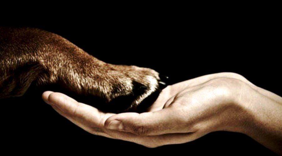 Pata-de-Perro-1 7 cosas que nos sabias de tu perro 7 cosas que nos sabias de tu perro Pata de Perro 1
