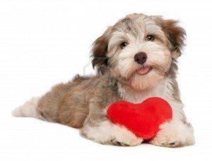 Perrito _con_corazon_3 Como cuidar el corazón de nuestro perro Como cuidar el corazón de nuestro perro Perrito  con corazon 3