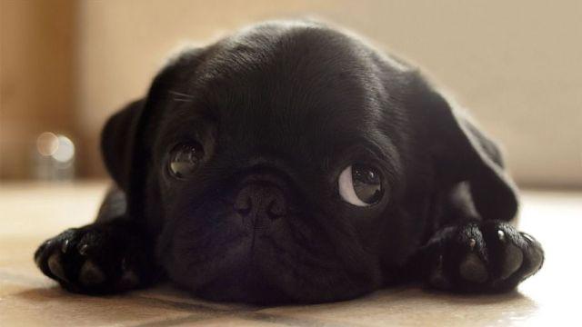 PUBLISHED by catsmob.com Mi perro vomita espuma blanca¿Por que? Mi perro vomita espuma blanca ¿Por que? Perrito calimero