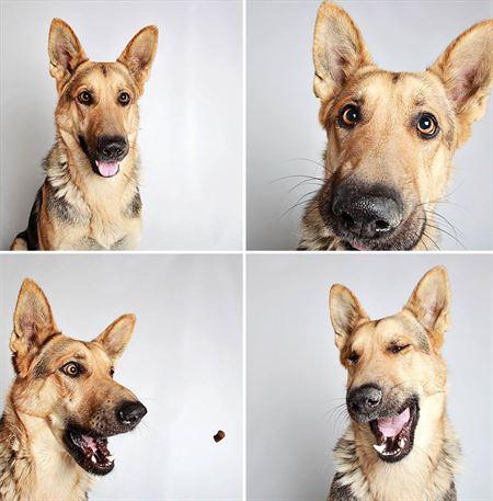fotonoticia_20150323172626-15031240539_450 Fotomatón para dar a conocer a sus perros en adopción Fotomatón para dar a conocer a sus perros en adopción fotonoticia 20150323172626 15031240539 450
