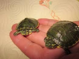 images Ansiedad y estrés en la tortuga Ansiedad y estrés en la tortuga images