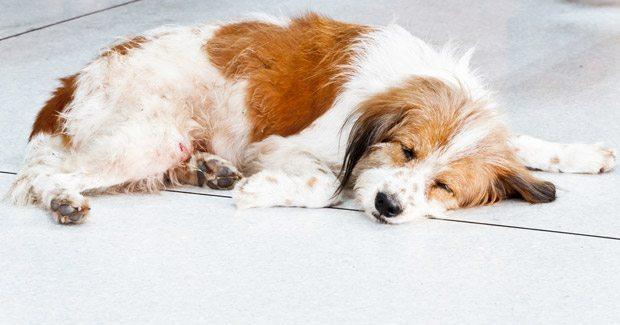 perro-epilepsia La epilepsia en perros La epilepsia en perros perro epilepsia