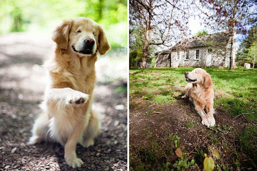 smiley-perra-de-terapia-ciega-6 Smile, la perra ciega que ayuda a personas discapacitadas Smile, la perra ciega que ayuda a personas discapacitadas smiley perra de terapia ciega 6