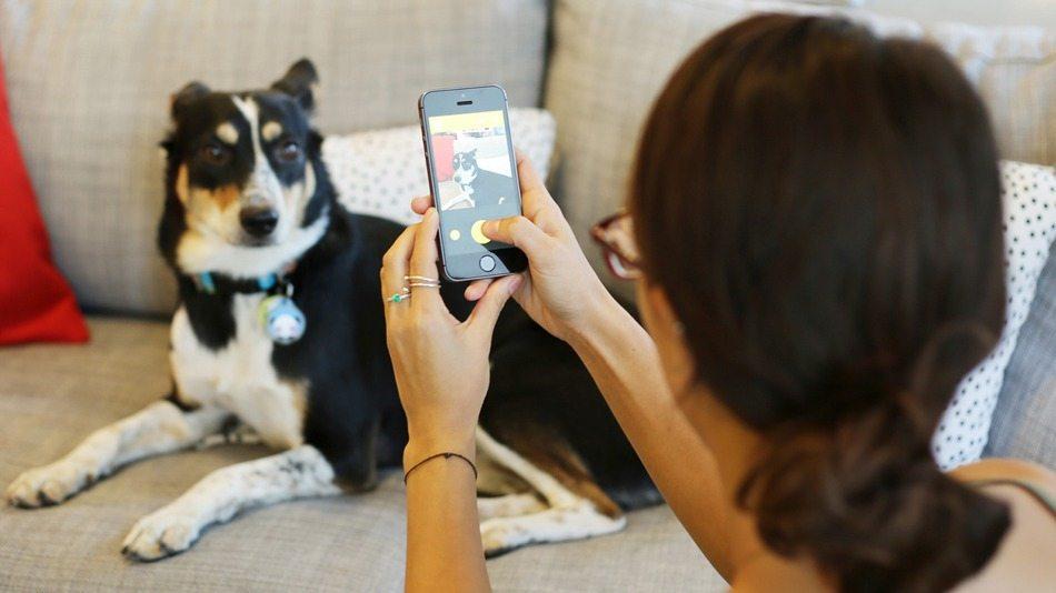 "BarkCam4 BarkCam, la BarkCam, la ""app"" para fotografiar a nuestro perro BarkCam4"