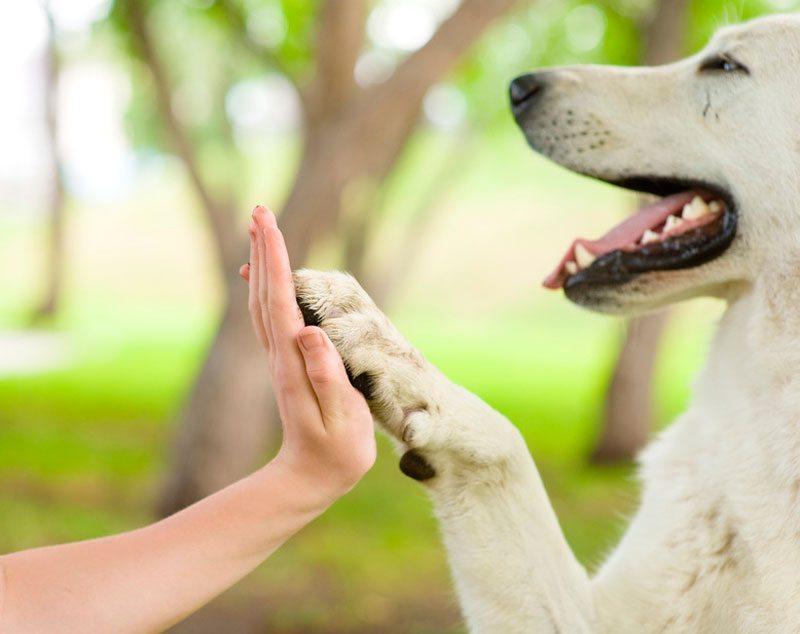 jndineiufv ¿Sientes que tu perros es como un hijo? ¿Sientes que tu perros es como un hijo? jndineiufv