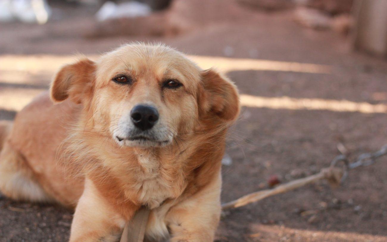 mestizo ¿Sabías que los perros mestizos viven más años? ¿Sabías que los perros mestizos viven más años? mestizo