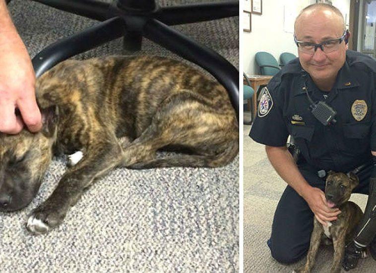 policia-rescata-perros-04-m8e9c8nx9om6ffevt1921xi6i2nft9n6m8rx5idx4s Un policía salva a un cachorro y lo adopta Un policía salva a un cachorro y lo adopta policia rescata perros 04 m8e9c8nx9om6ffevt1921xi6i2nft9n6m8rx5idx4s