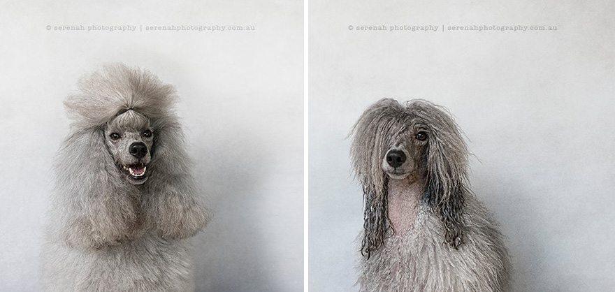 serenah-photography-perros-mojados-06 Perros antes y después de la ducha Perros antes y después de la ducha serenah photography perros mojados 06