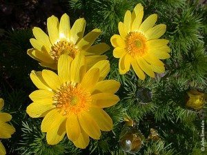 adornis de primavera Adornis de primavera Adornis de primavera adornis de primavera