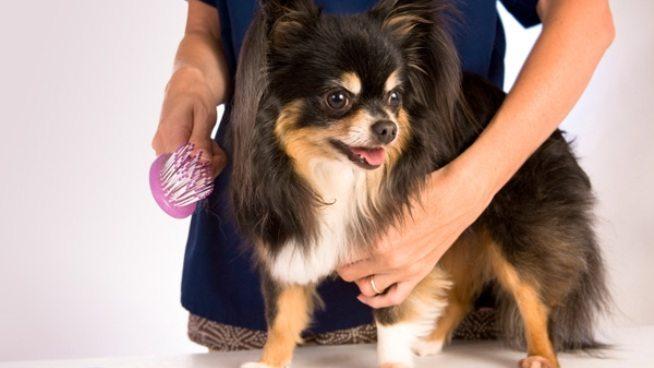 j ¿Se le cae mucho el pelo a tu perro? ¿Se le cae mucho el pelo a tu perro? j