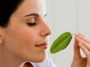 plantas-balsamicas-respirar 5 remedios naturales para curar la gripe 5 remedios naturales para curar la gripe plantas balsamicas respirar