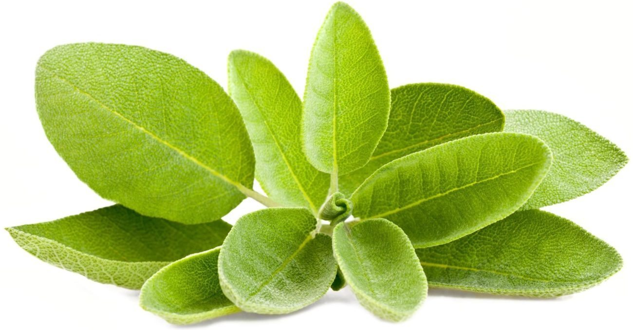 salvia remedios caseros para quitar mal olor de pies Remedios para eliminar olor de pies salvia