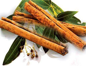 canela medicinal Árbol de la canela Árbol de la canela canela