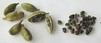 elettaria-cardamomum Cardamomo Cardamomo elettaria cardamomum