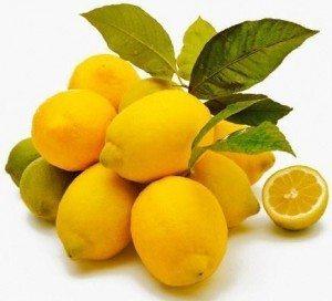 limonero Limonero Limonero limonero 2