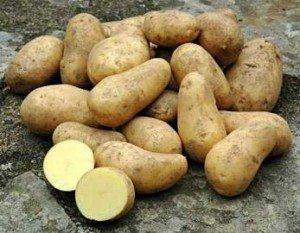 patata Patata Patata patata