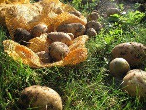 patata Patata Patata patatass