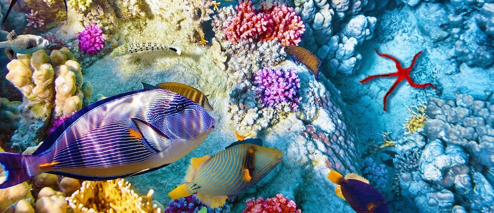 la gran barrera de coral La Gran Barrera de Coral La Gran Barrera de Coral barrera de coral