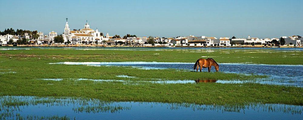 doñana parque nacional Parque Nacional Doñana Parque Nacional Doñana donana