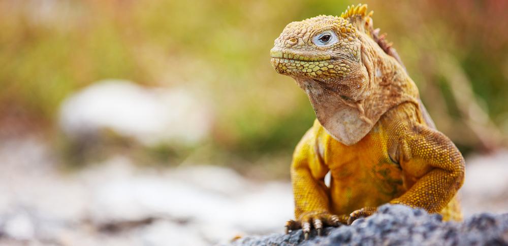 galápagos Isla de las Galápagos, un paraíso fascinante Isla de las Galápagos, un paraíso fascinante gal  pagos