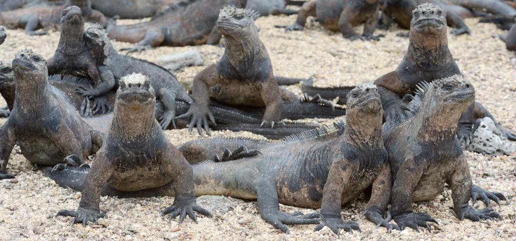 galápagos viajar Isla de las Galápagos, un paraíso fascinante Isla de las Galápagos, un paraíso fascinante gal  pagos2