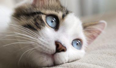 gatos psicologia