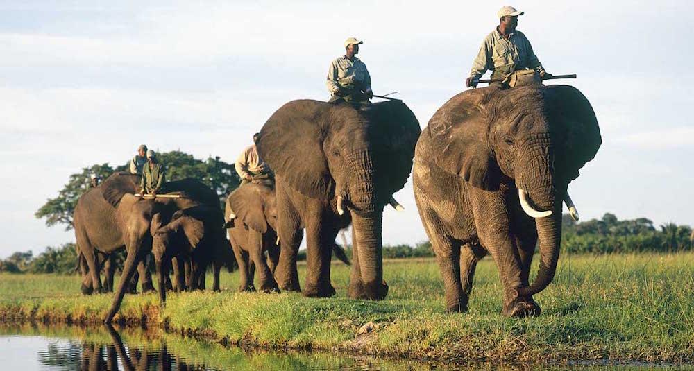 delta okavango Delta del Okavango Delta del Okavango okavango