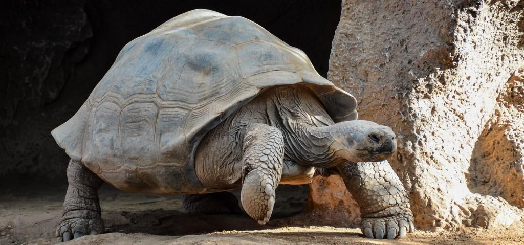 tortuga galápagos Isla de las Galápagos, un paraíso fascinante Isla de las Galápagos, un paraíso fascinante tortuga gal  pagos