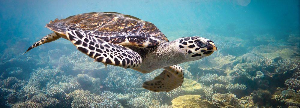Maldivas Las Islas Maldivas Las Islas Maldivas tortugas maldivas