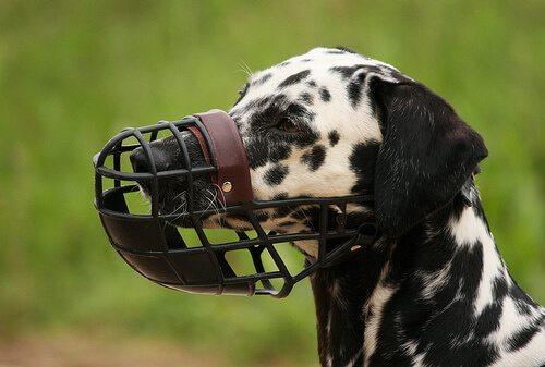 bozal-para-perros Consejos: Perros y bozal Consejos: Perros y bozal bozal para perros