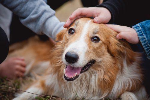 saludo-perro Cómo saludar a un perro Cómo saludar a un perro saludo perro