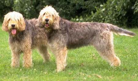 Otterhound Otterhound Otterhound Otterhound 1