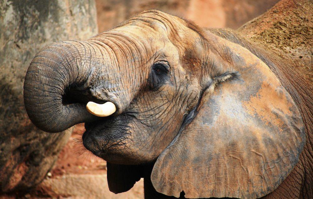 Tsavo elefante Tsavo Tsavo Tsavo