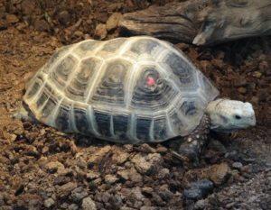 tortuga de cabeza amarilla La tortuga de cabeza amarilla La tortuga de cabeza amarilla tortuga de cabeza amarilla