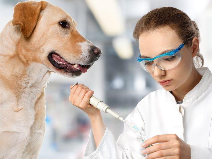 perro-enfermedad Como saber si tu perro o gato es diabético. Como saber si tu perro o gato es diabético perro enfermedad